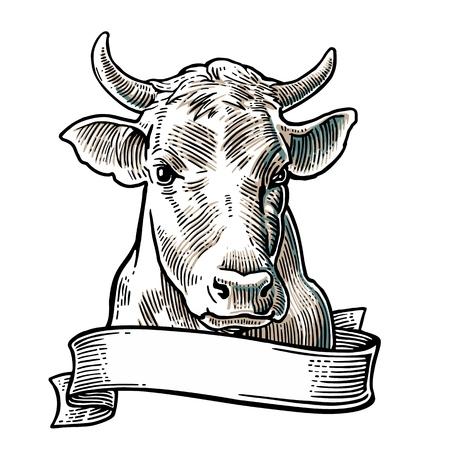 牛の頭。グラフィック スタイルで描画の手。ビンテージ ベクトル情報グラフィック、ポスター、web 用イラストを彫刻します。白い背景に分離