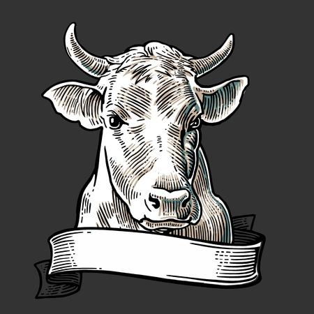リボン付き牛ヘッドです。グラフィック スタイルで描画の手。ビンテージ ベクトル情報グラフィック、ポスター、web 用イラストを彫刻します。白  イラスト・ベクター素材