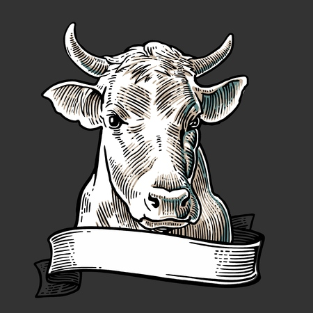 Cows head with ribbon. Hand drawn in a graphic style. Vintage vector engraving illustration for info graphic, poster, web. Isolated on white background