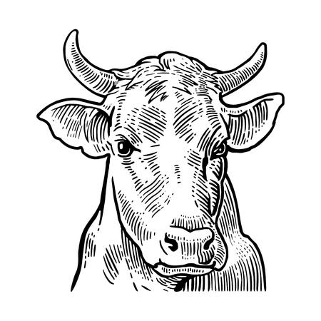 Koeien hoofd. De hand getekend in een grafische stijl. Vintage vector graveren illustratie voor info grafisch, poster, web. Geïsoleerd op witte achtergrond Stockfoto - 56546480