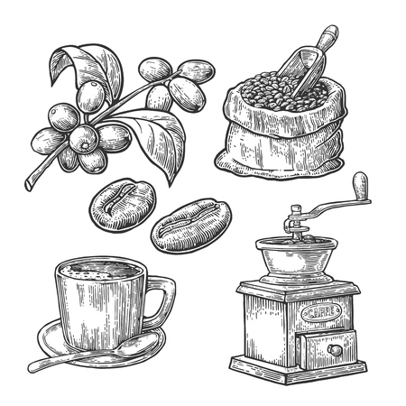 bagful: Sack with coffee beans with wooden scoop and beans, cup, branch with leaf and berry. Hand drawn sketch style. Vintage vector engraving illustration for label, web.  Isolated on white background.