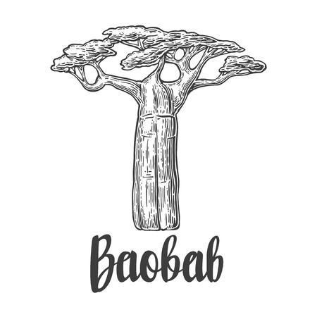 바오밥 나무. 벡터 빈티지 흰색 배경에 그림을 새겨 져. 손으로 그린 스케치