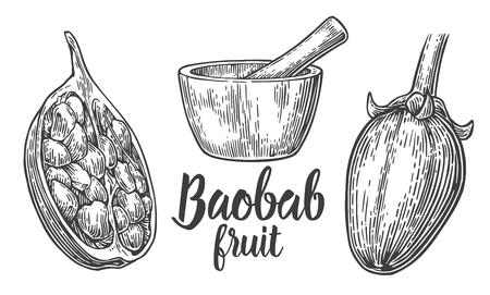 baobab: Baobab fruit and seeds. Mortar and pestle. Vector vintage engraved illustration on white background. Hand drawn sketch Illustration