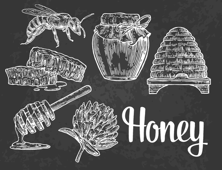 honeyed: Honey set. Jars of honey, bee, hive, clover, honeycomb. Vector vintage engraved illustration. Isolated on black background.