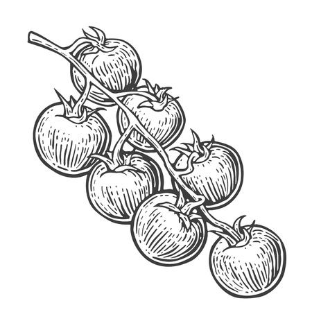 tomate cherry: manojo de tomate. Vector ilustración grabada aislado sobre fondo blanco.