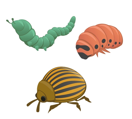 Green and pink caterpillar, colorado potato beetle isolated on white background. Vector flat illustration. Иллюстрация
