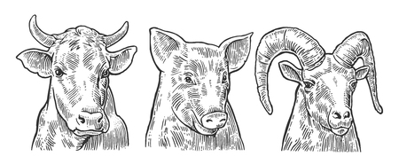 goat head: Farm animals icon set. Pig, cow and goat heads isolated on white background. Vector black vintage engraving illustration for menu, web and label. Hand drawn in a graphic style.