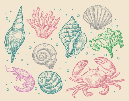 cockle: Set sea shell, coral, crab and shrimp. Vector engraving vintage illustrations. Isolated on white background.