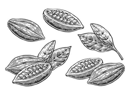 Hojas y frutos de cacao en grano. la vendimia del vector ilustración grabada. Negro sobre fondo blanco.