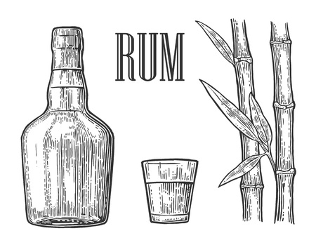 Glass and bottle of rum with sugar cane. Vintage vector engraving illustration for label, poster, web, invitation to party. Isolated on white background Ilustração