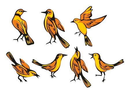 oriole: Golden Oriole isolated on white background. Set sitting and flying bird. Vector flat illustration. Illustration