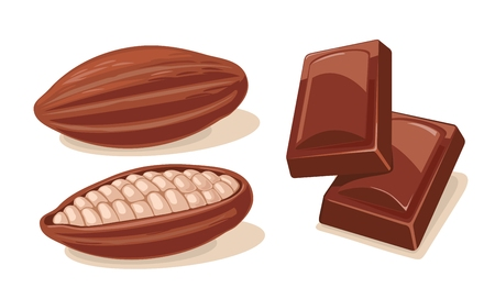 Two chocolate pieces and fuits of cocoa beans. Vector flat color illustration. Isolated on white background.