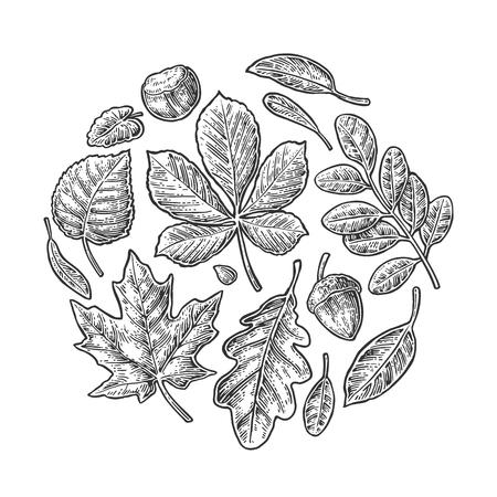 Set leaf. Vector vintage engraved illustration. Isolated on white background Illustration