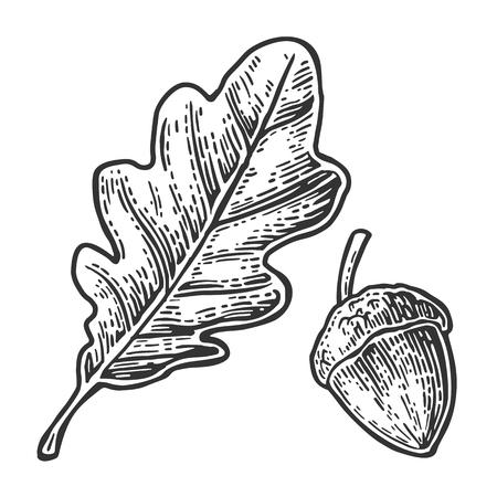 hoja de roble y bellotas. la vendimia del vector ilustración grabada. Aislado en el fondo blanco Ilustración de vector