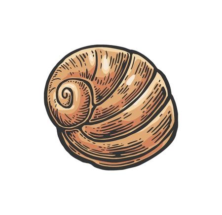 Sea shell nautilus. Color engraving vintage illustration. Isolated on white background. Illustration