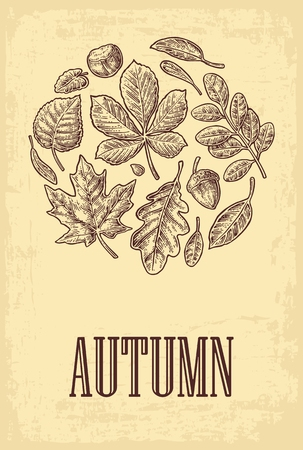 linden tree: Poster AUTUMN with set leaf and acorn. Vector vintage engraved illustration. Isolated on beige background