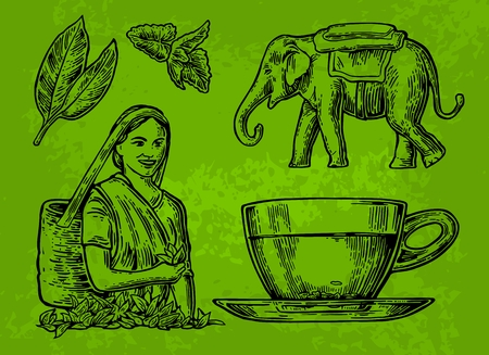 picker: Tea picker woman, tea leaves, cup, elephant. Vector engraved vintage isolated illustration for label, poster, web. Black on white background.