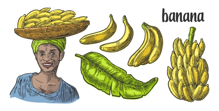 banana leaf: Two single and bunches of fresh banana with leaf. African woman carries a basket with fruits on her head. Vector color vintage engraving illustration isolated on white background. For menu, web, label
