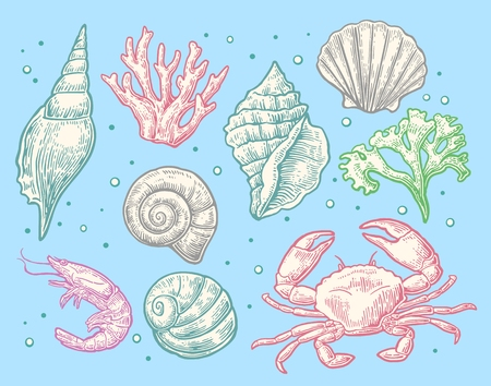 cockleshell: Set sea shell, coral, crab and shrimp. Vector engraving vintage illustrations. Isolated on blue background. Illustration