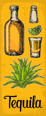 Glass and bottle of tequila. Cactus agave, salt and lime. Vintage color vertical vector engraving illustration for label, poster, web. Isolated on yellow background.