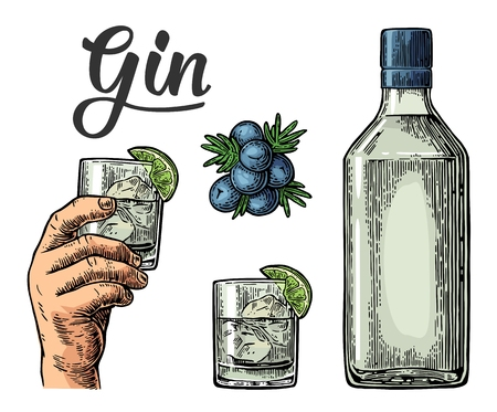 Glass and bottle of gin and branch of Juniper with berries. Vintage vector engraving illustration for label, poster, web, invitation to party. Isolated on white background Çizim