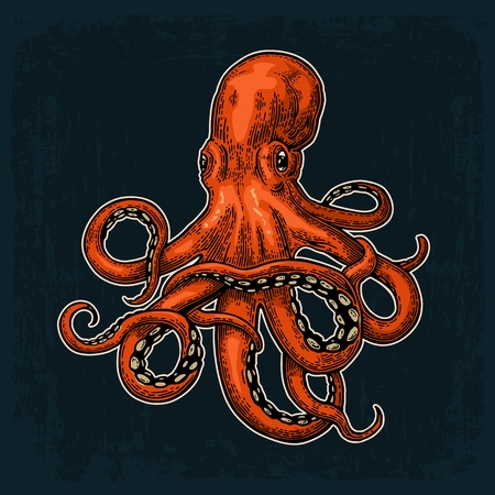 Octopus. color engraving vintage illustrations. Isolated on white background. 일러스트