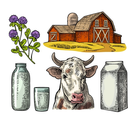 Set Milk farm. Cow head, clover, box carton package, glass and bottle. Vector engraving vintage color illustration. Isolated on white background. Illustration