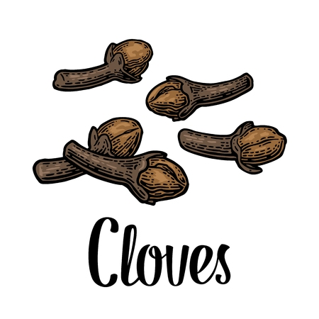 Cloves. Isolated on white background. Vector color vintage engraving illustration. Hand drawn design element and lettering for label and poster Illusztráció