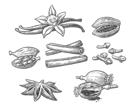 Set of spices. Anise star, cardamom, clove, cinnamon stick, fruits of cocoa beans, vanilla stick and flower, poppy heads and seeds. Isolated on white background. Vector black vintage engraving illustration.
