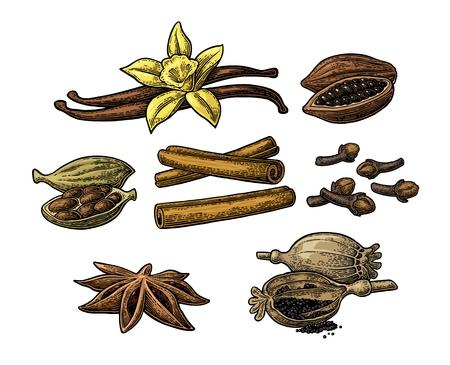 Zestaw przypraw. Gwiazda anyżkowa, kardamon, ząbek, pałeczek cynamonu, owoce ziaren kakaowych, wanilia kije i kwiatki, głowy maku i nasiona. Samodzielnie na białym tle. Wektor kolorowy rocznika grawerowanie ilustracji. Ilustracje wektorowe