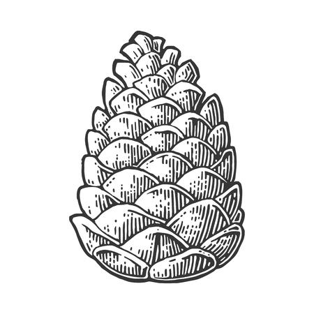 Pomme de pin. Isolé sur fond blanc Illustration de gravure noire vintage Vector. Vecteurs