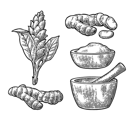 Turmeric root, powder and flower with pestle and mortar. Hand drawn vector vintage engraved illustration. Isolated on white background.