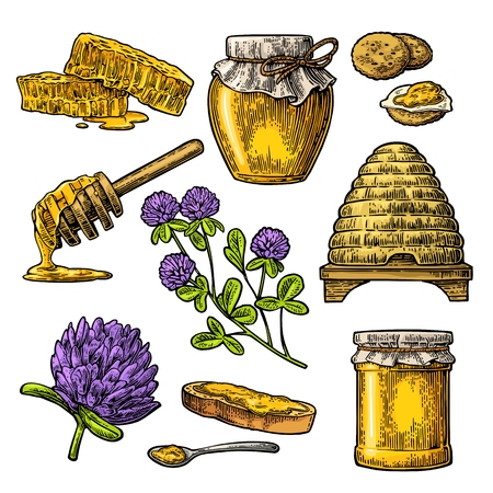Honey set. Jars of honey, bee, hive, clover, spoon, cracker, bread and honeycomb. Vector vintage color engraved illustration. Isolated on white background.