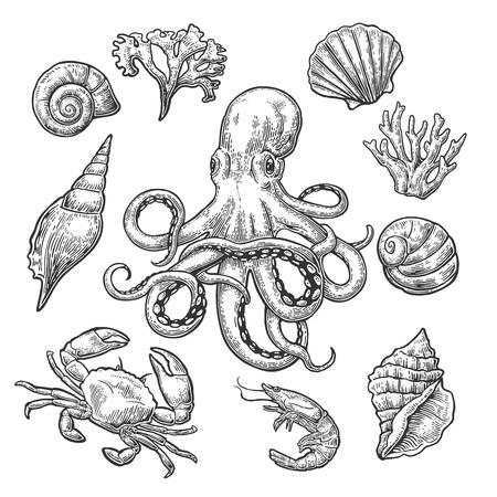 Zet zeeschelp, koraal, krab, garnalen en octopus. Vector zwarte gravure vintage illustraties. Geïsoleerd op een witte achtergrond. Stockfoto - 71584121