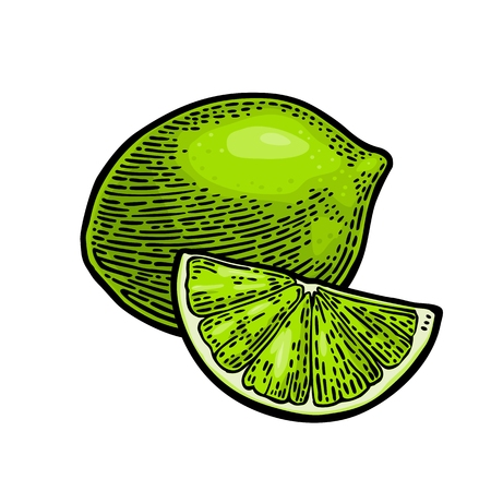 Lime whole and slice. Vintage color vector engraving illustration for label poster web. Isolated on white background