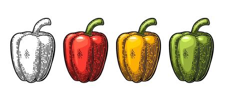 Poivron doux Illustration gravée vintage de vecteur Banque d'images - 75890162