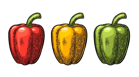 Sweet bell pepper. Vector vintage engraved illustration Çizim