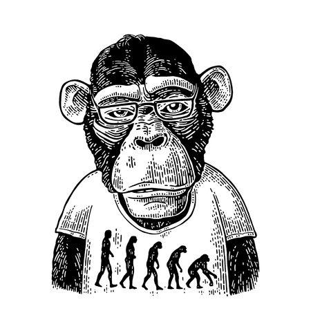 Monkeys in a T-shirt with the theory of evolution on the contrary. Vectores