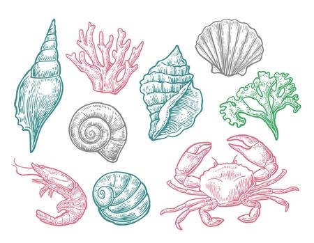 Set sea shell, coral, crab and shrimp. Ilustração