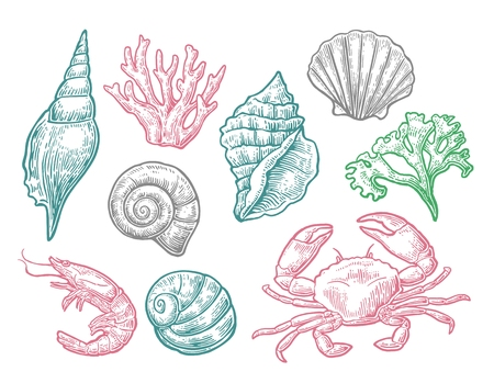 Set sea shell, coral, crab and shrimp. Illustration