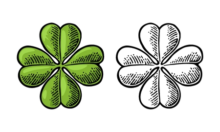 lucky clover: Good luck four leaf clover. Vintage color and black vector engraving illustration for info graphic, poster, web. Isolated on white background.