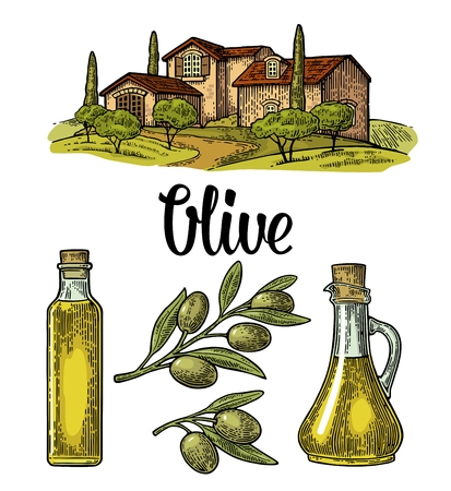 Set olive. Bottle and Jug glass of liquid with cork stopper and branch with leaves. Rural landscape with villa or farm with field, tree and cypress. Vector vintage color engraving on white background Çizim