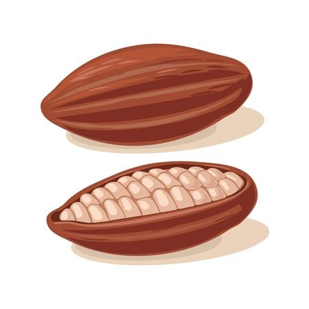 코코아 콩 Fuits. 벡터 평면 컬러 그림입니다. 흰색 배경에 고립. 일러스트