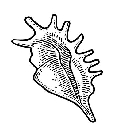 Sea shell. Black engraving vintage illustration. Isolated on white background