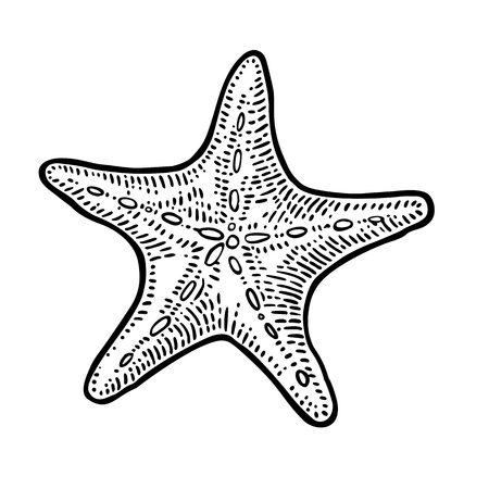 Sea star isolated on white background. Vintage black vector engraving illustration. Hand drawn in a graphic style.