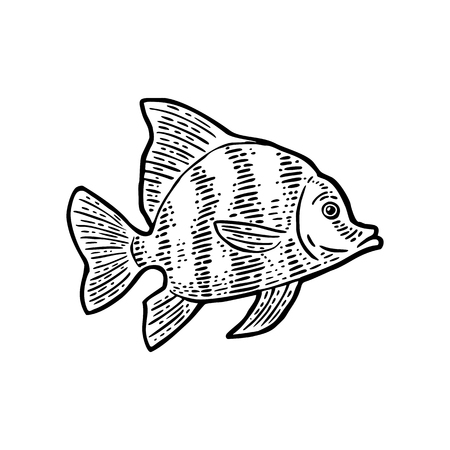 Fish. Vector black engraving vintage illustrations. Isolated on white background.