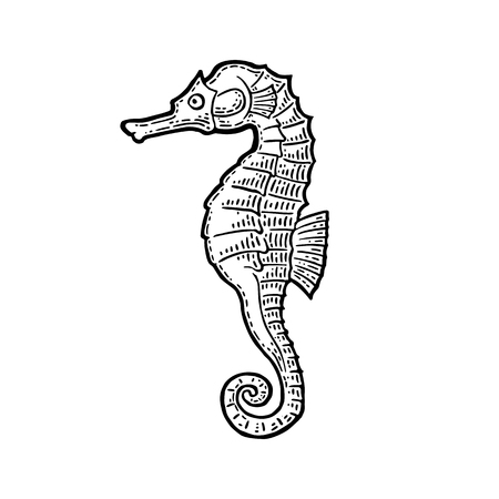 underwater fishes: Sea Horse. Vector black engraving vintage illustrations. Isolated on white background.