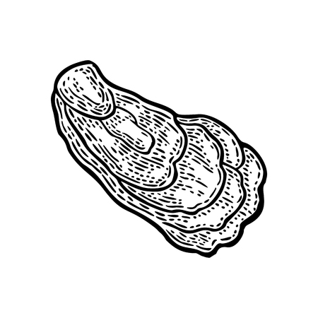 Oyster isolated on white background. Vintage black vector engraving