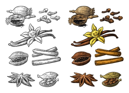 Set of spices. Anise, cinnamon, cocoa, vanilla, poppy Illustration