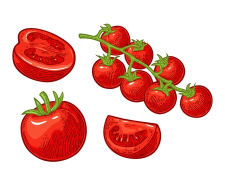 Set of hand drawn tomatoes. Branch, whole and slice. Иллюстрация